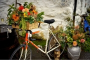 bike-basket-flowers-delamere-flower-farm